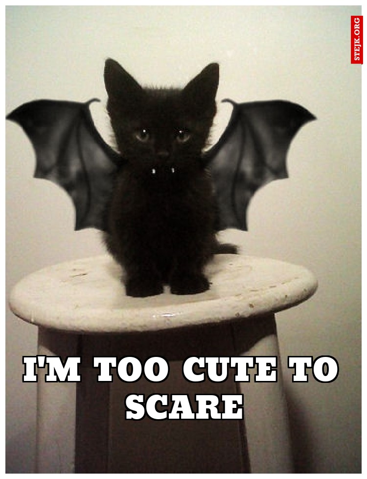 I'M TOO CUTE TO SCARE