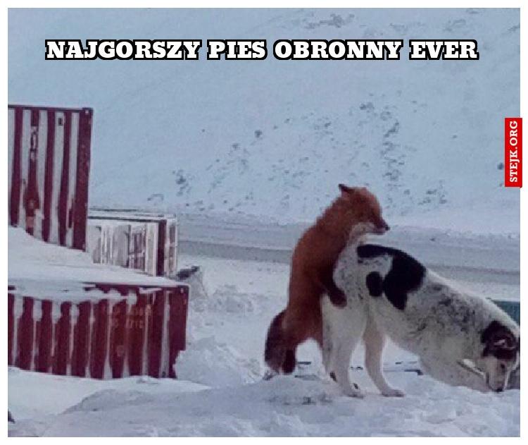Najgorszy pies obronny ever